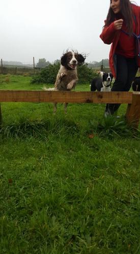 Mutley Jumping