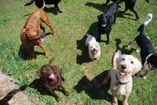 Bruce , Albi , Charlie , Monty , Monty , Cracker