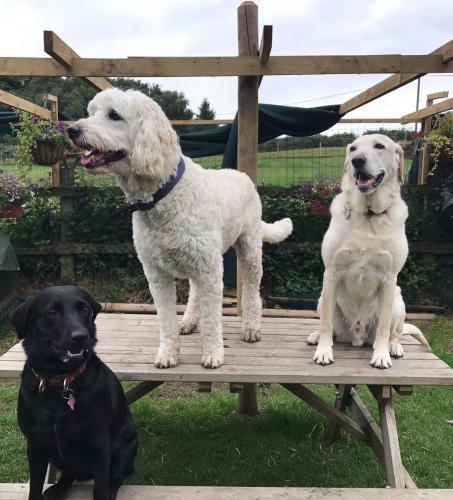 Dave , Owen and Saffy