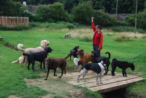 Charlie , Rex , Woody , Cracker , Finley , Bruce