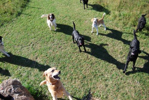 Max , Saffy , Jesscia , Dougle and Patch