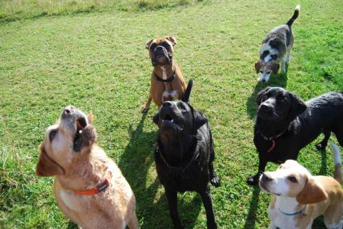 Maxwell , Benji , Dougle , Oscar