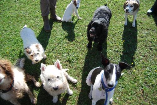 Daisy , Molly , Jack , Mutley , Finnbar , Oscar and Ollie