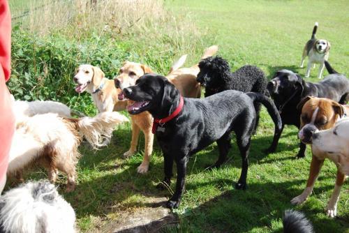 Rex , Odie , Dougle , Oscar , Cassie , Ruby
