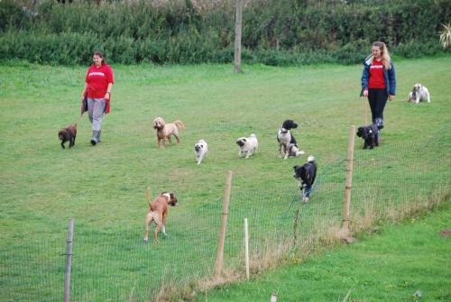Teddy , Bailey , Bud , Betty , Smudge , Harvey , Cracker and Odie