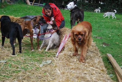 Milo, Roary , mutley , Saga , Darcy , Nanook and Shay