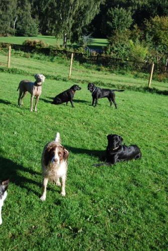 Mutley, Jessica, Monty, Tilly and Casper