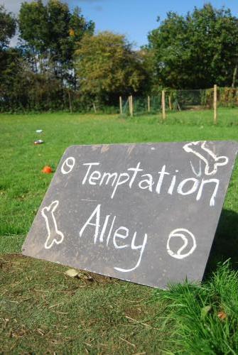 Temptation Ally