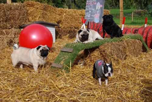 Lola, Betty, Bud and Harley
