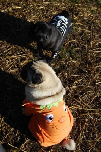 Lola the Skeleton and Bud the Pumpkin