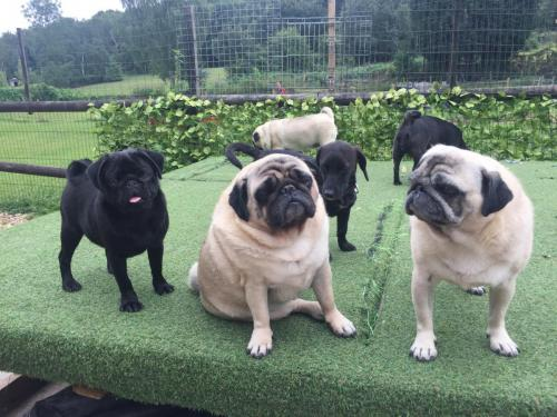 Raffety , Bud , Betty , Hettie and Lola
