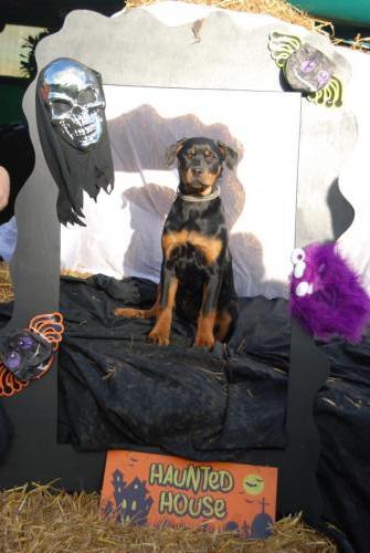 Tessa the Rottweiler