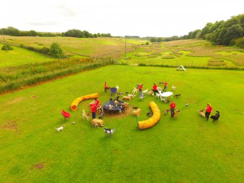 Ariel shot of the agility course